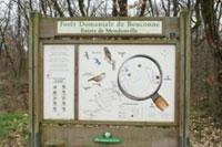 Forêt de Bouconne
